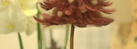 015_kwiaciarnia_dafe_wroclaw_dekoracje_bozonarodzeniowe