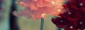 027_kwiaciarnia_dafe_wroclaw_dekoracje_bozonarodzeniowe