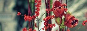 dekoracje_bozonarodzeniowe_wroclaw_09