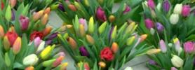 kwiaty_wroclaw