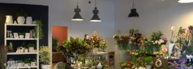 kwiaciarnia_dafe_wroclaw