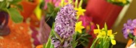 wiosna_kwiaciarnia