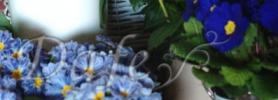 wiosna_kwiaciarnia_wroclaw_1
