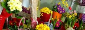wiosna_kwiaciarnia_wroclaw_2
