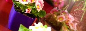 wiosna_kwiaty_wroclaw
