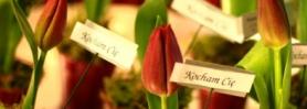 walentynki_tulipany