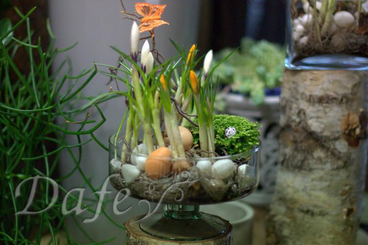 Wiosenno świąteczne Nasadzenia Kwiaciarnia Dafe