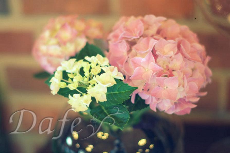 01_dekoracje_slubne_rozowa_hortensja