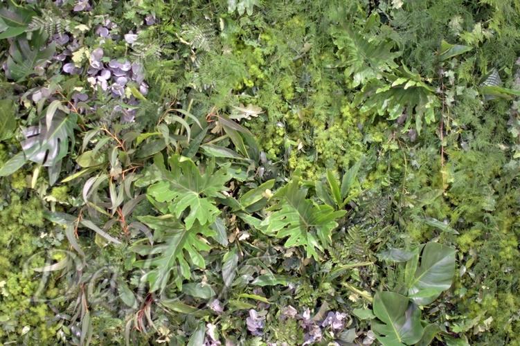 zielona sciana_04 wroclaw.NEF